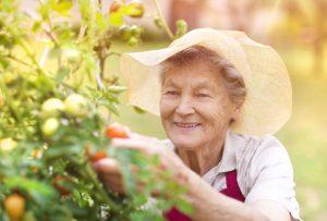 gardening, dementia, care, alzheimers