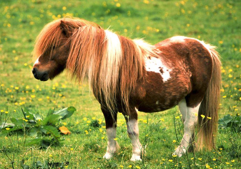 Fancy tea with a pony?